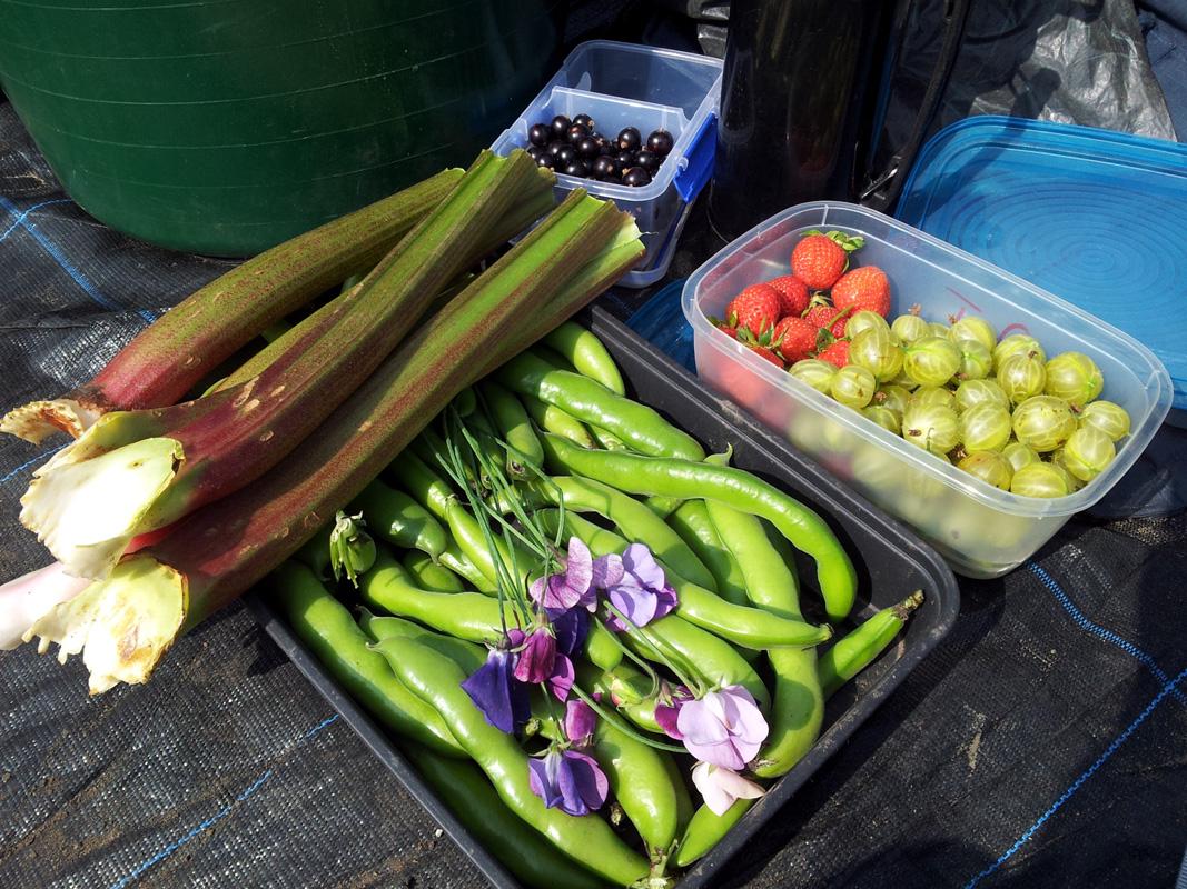July 2015 harvest selection