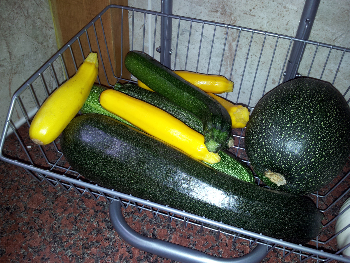 A small selection of courgettes