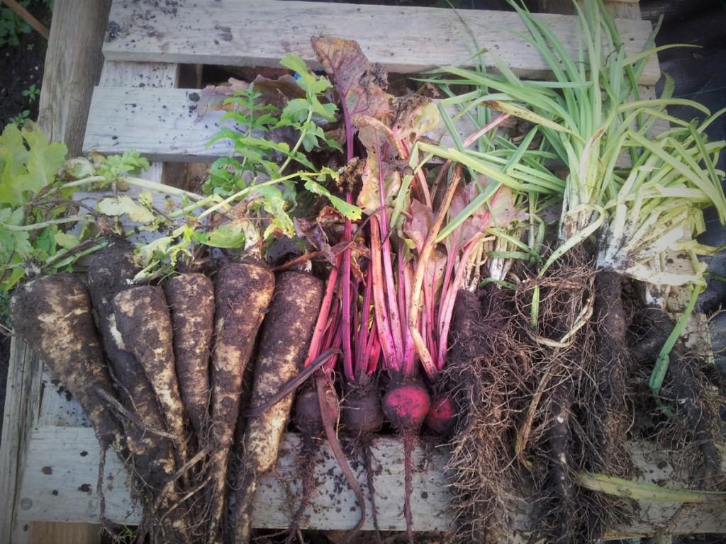 December 2015 - Roots!