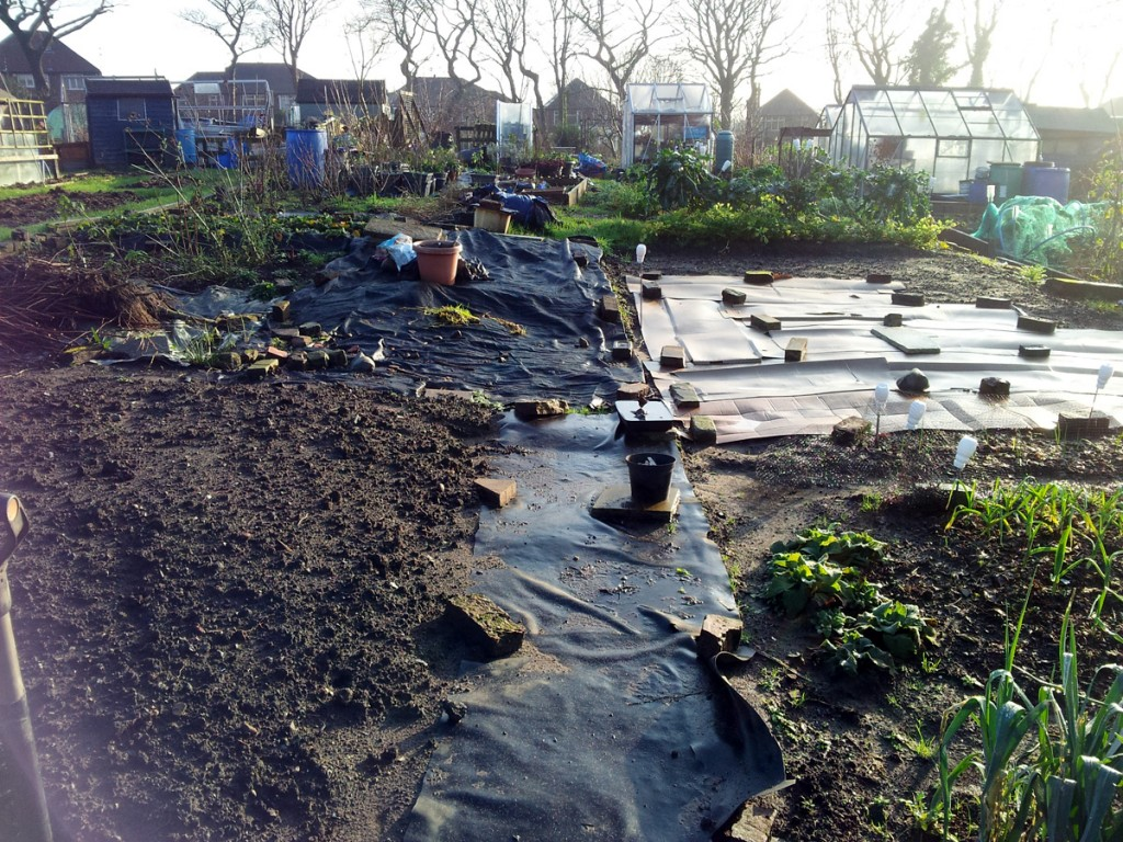 January 2016 Plot #59 status - soggy