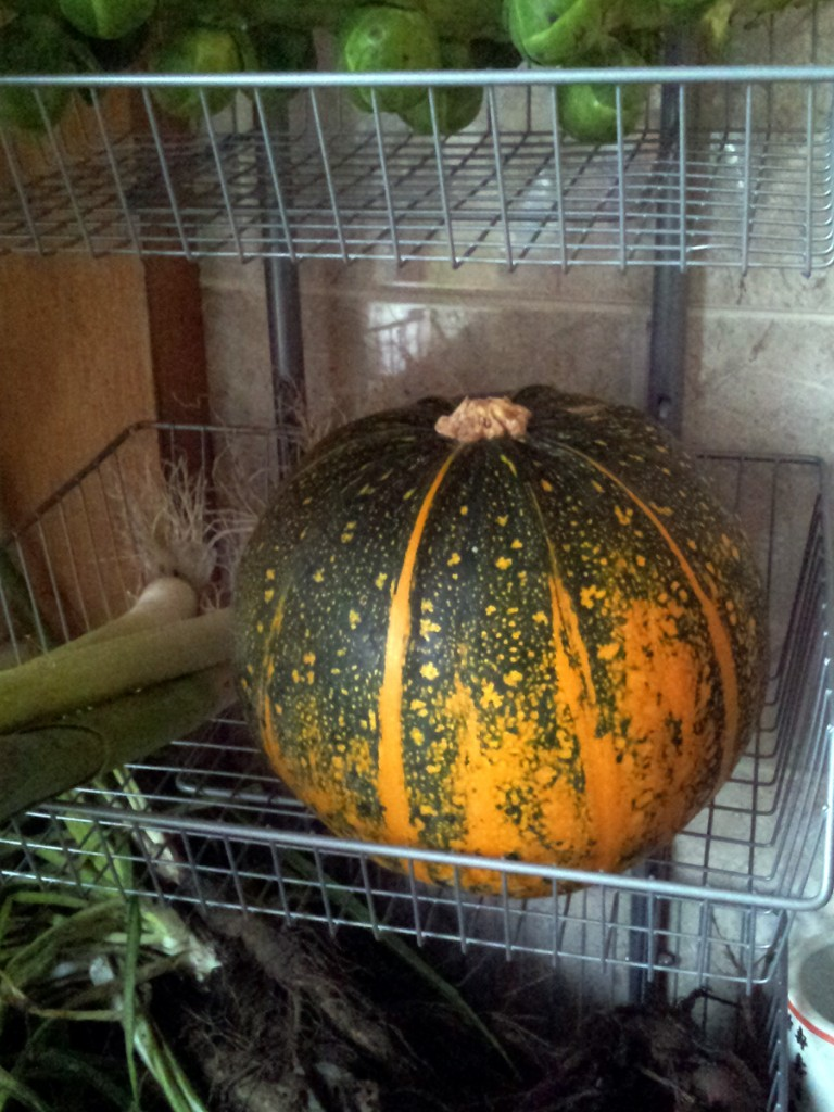 Courgette or pumpkin?