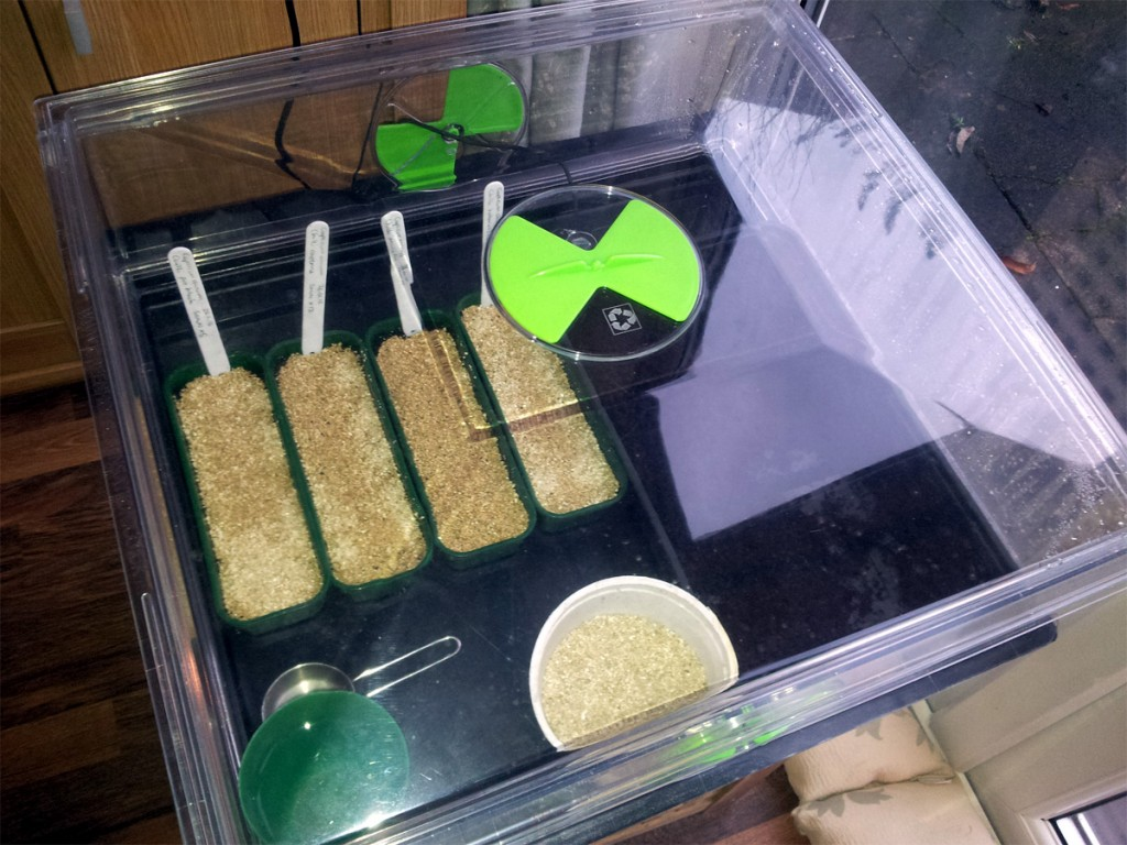 Jan 2016 - Chillis sown in the propagator