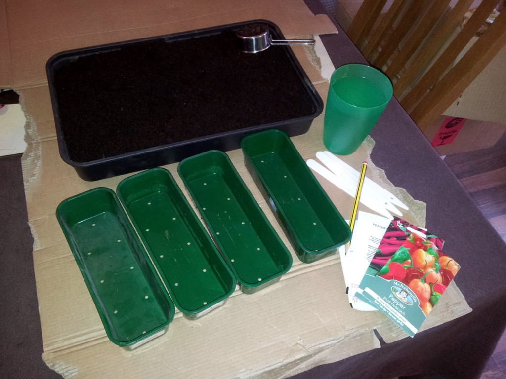 Jan 2016 - Chilli sowing