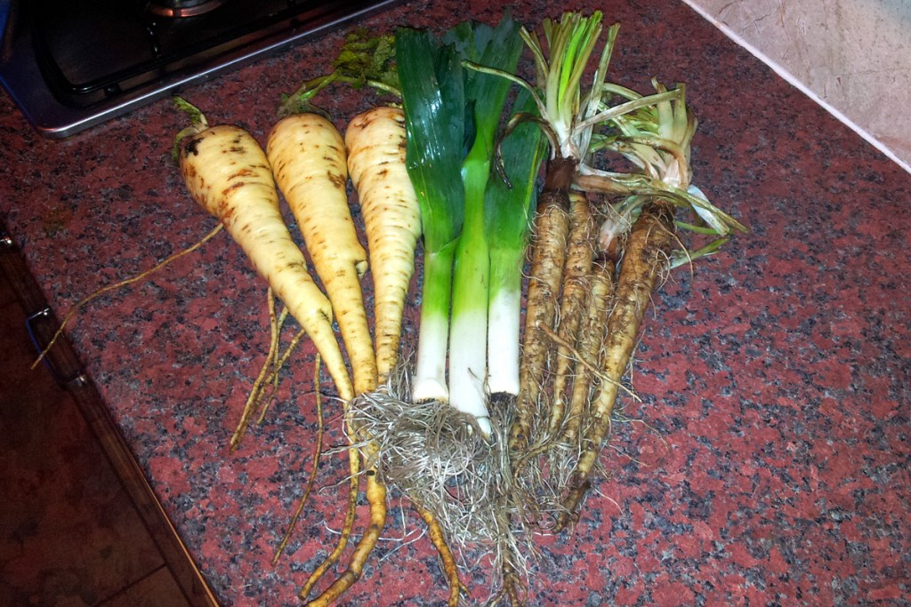 Harvest Monday! Parsnips, leeks and salsify.