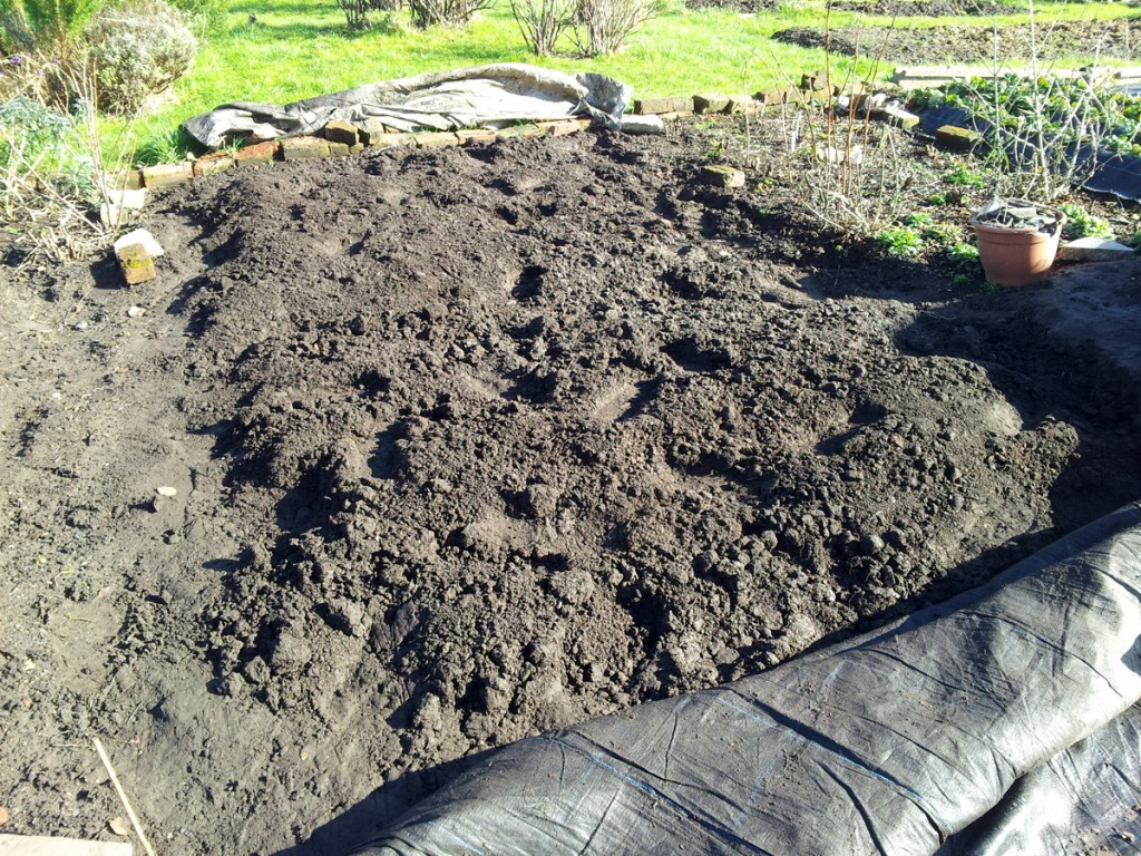 February 2016 asparagus bed 2nd dig: before