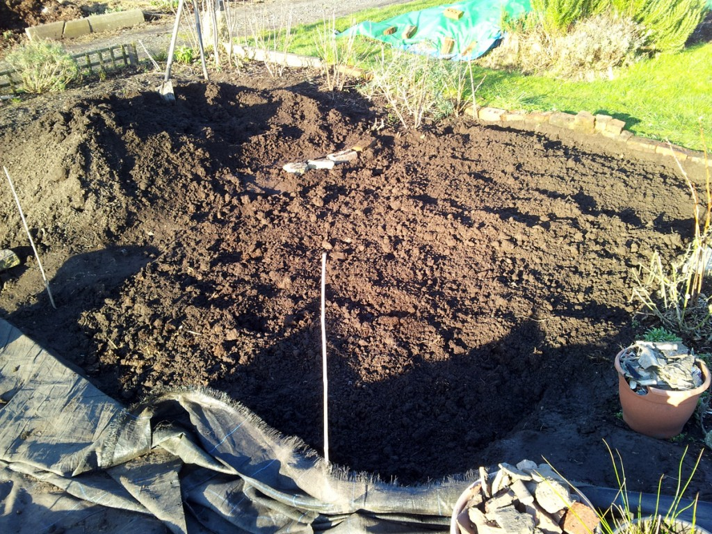 February 2016 asparagus bed 2nd dig: during