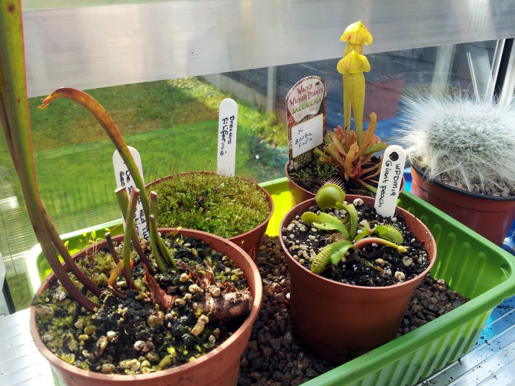 A selection of Wack's Wicked Carnivorous Plants