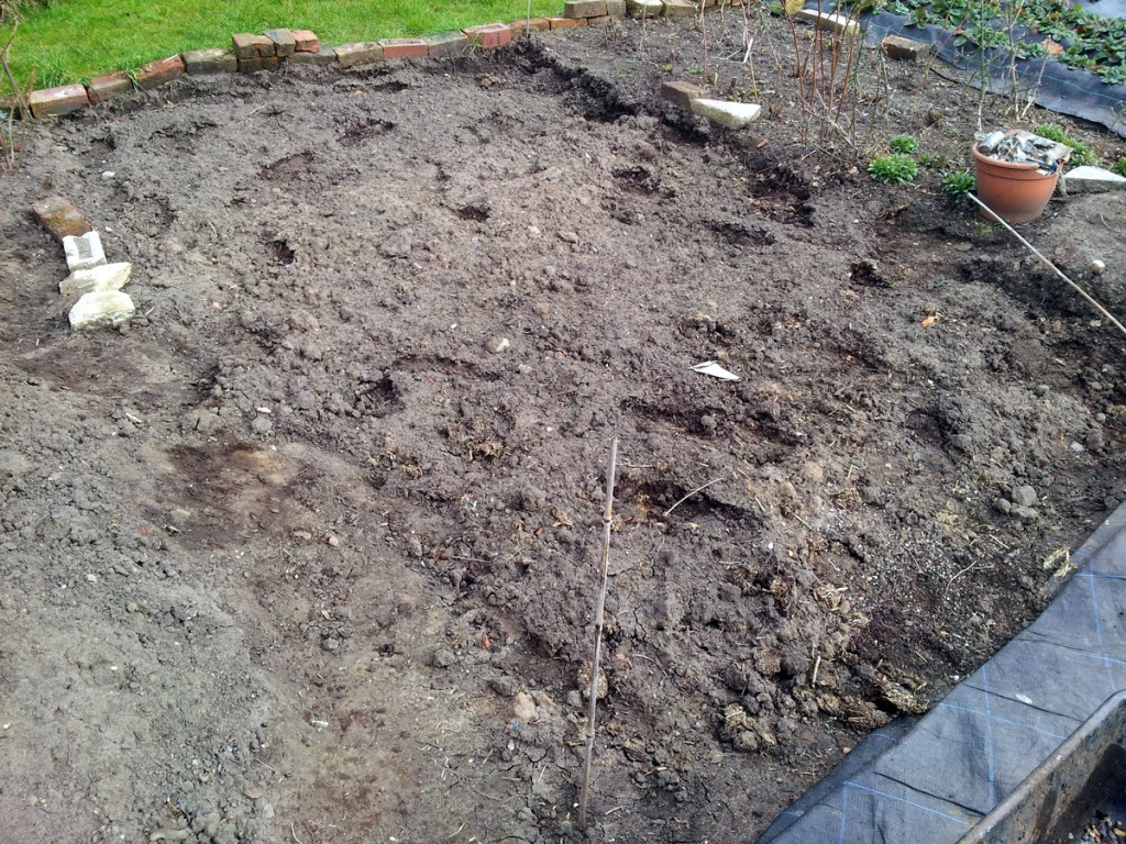 March 2016 - Asparagus bed, pre-ridging