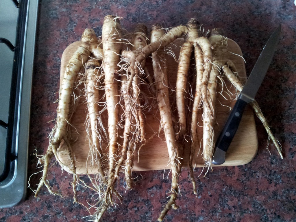 March 2016 - Last of the Salsify