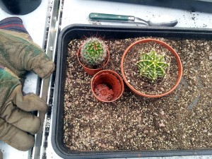 April 2016 cactus potting kit