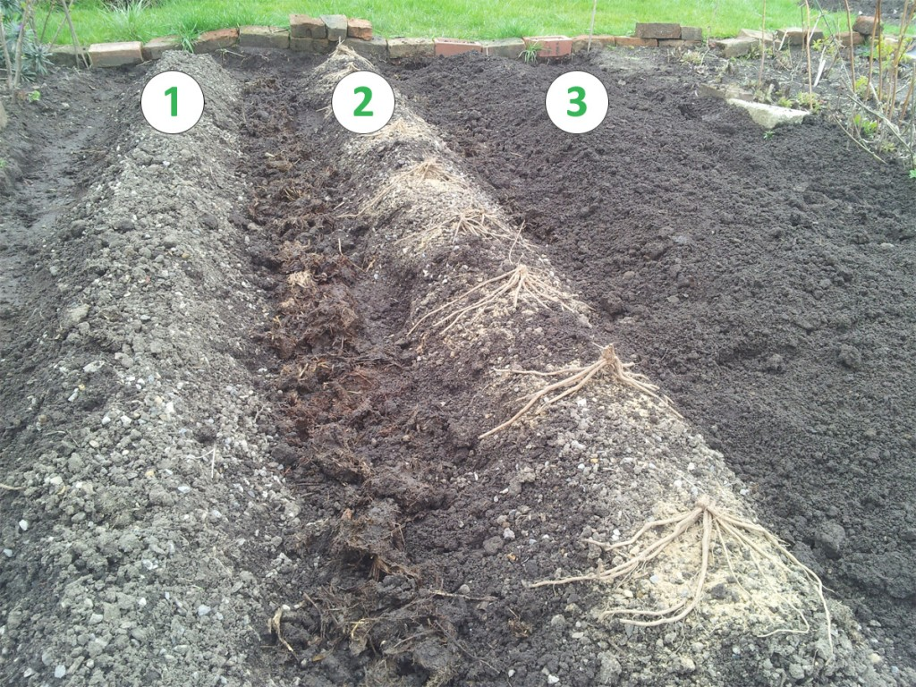 April 2016 - asparagus planting in progress