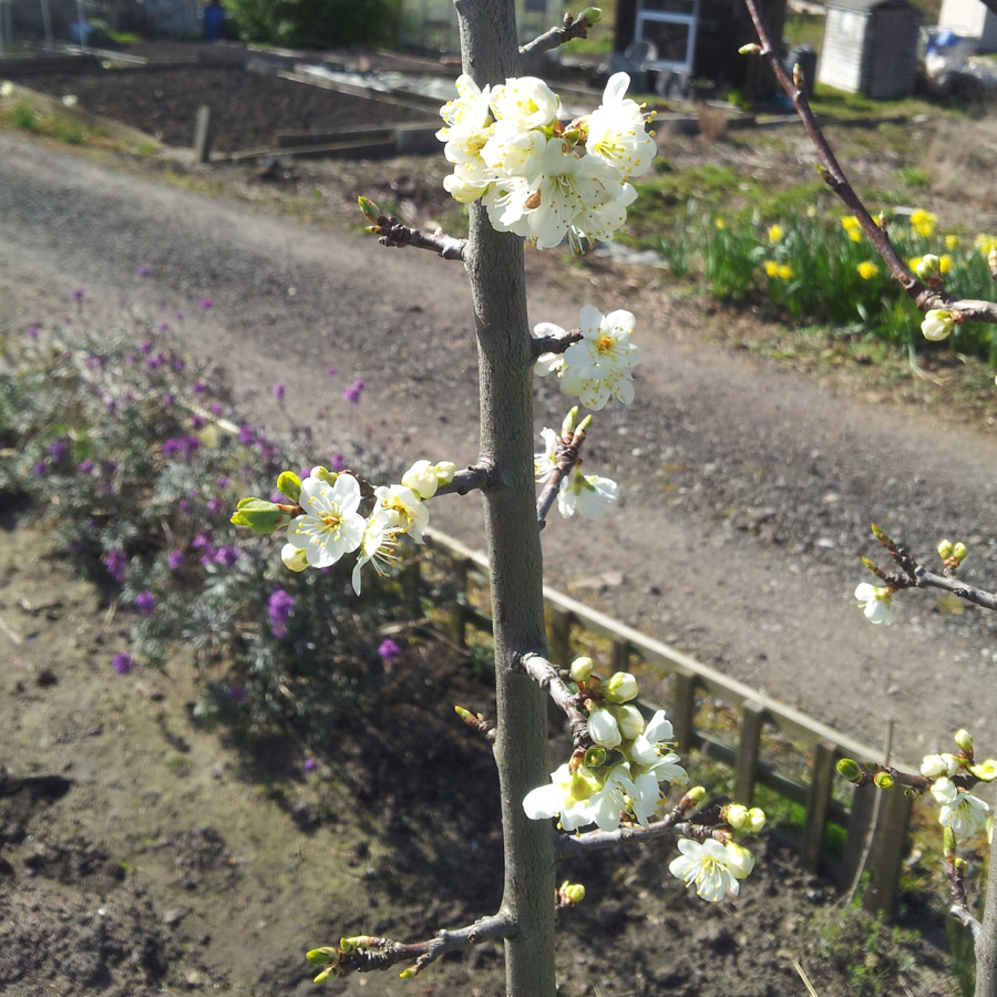 April 2016 mystery blossom