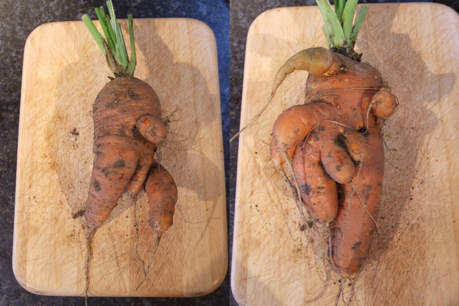 Mutant Carrots!