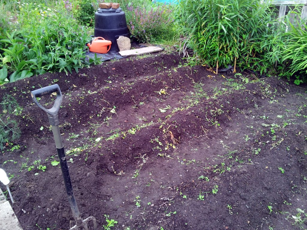 June 2016 spud patch after clearing