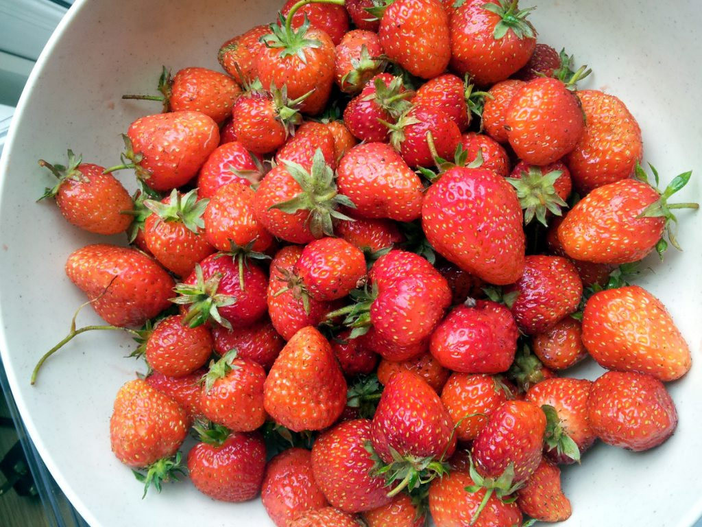 June 2016 -strawberry harvest