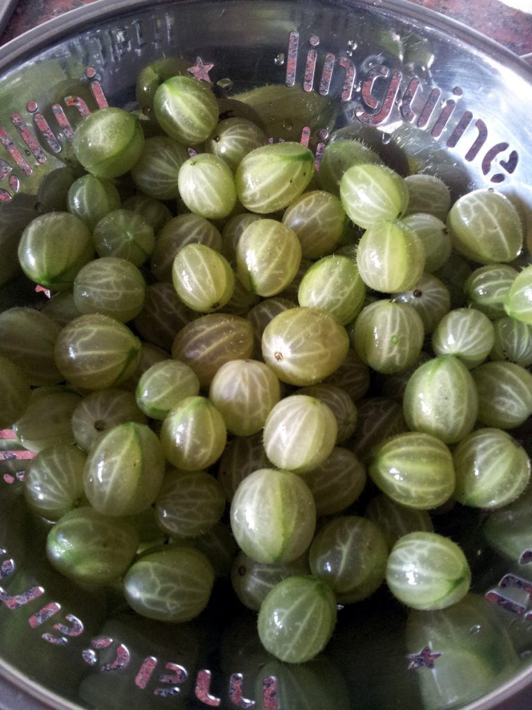 July 2016 - gooseberries