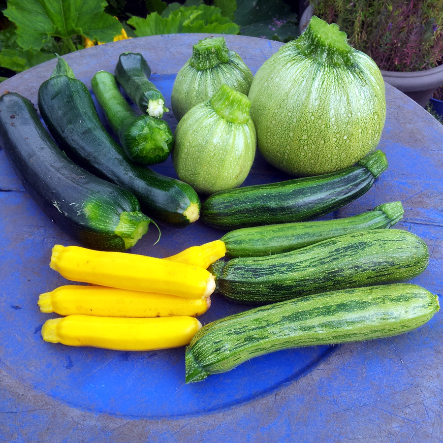 July 2016 - courgettes #1