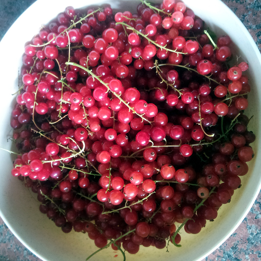 July 2016 - redcurrants