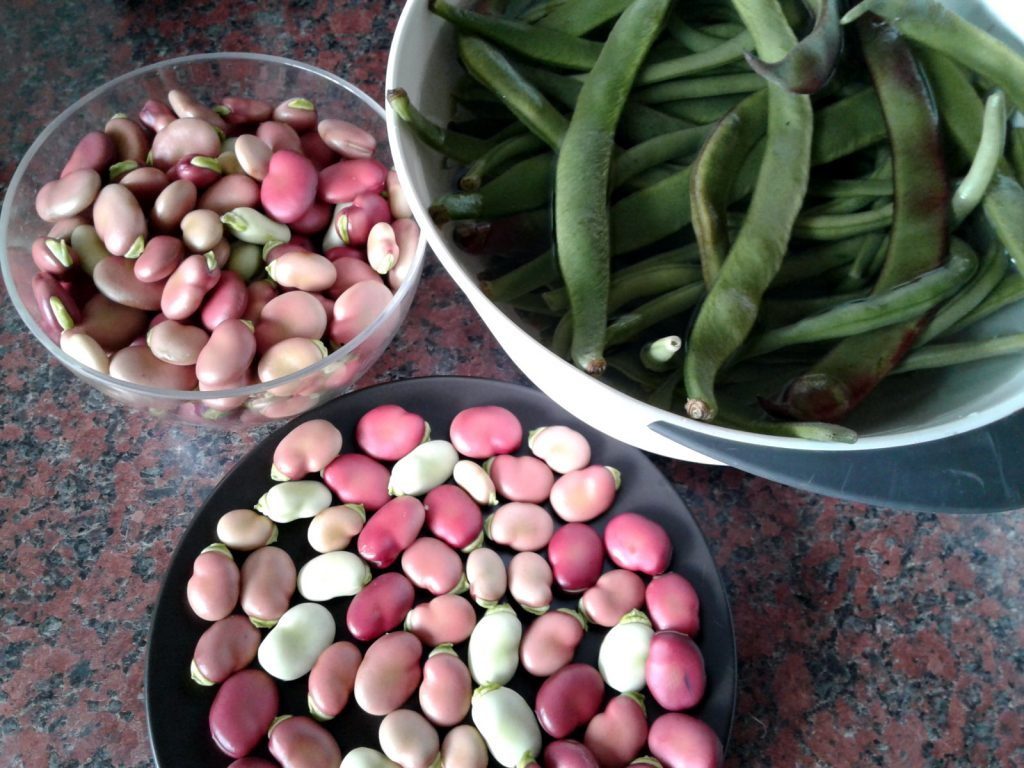 July 2016 beans