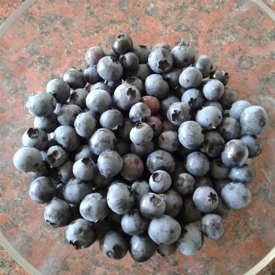 August 2016 - blueberries