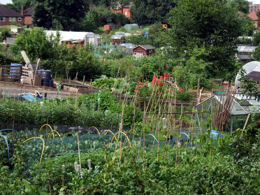 Langley Allotments, Summer 2016