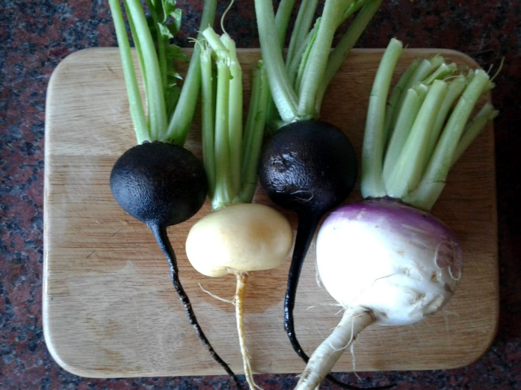 August 2016 - Black radish and turnips