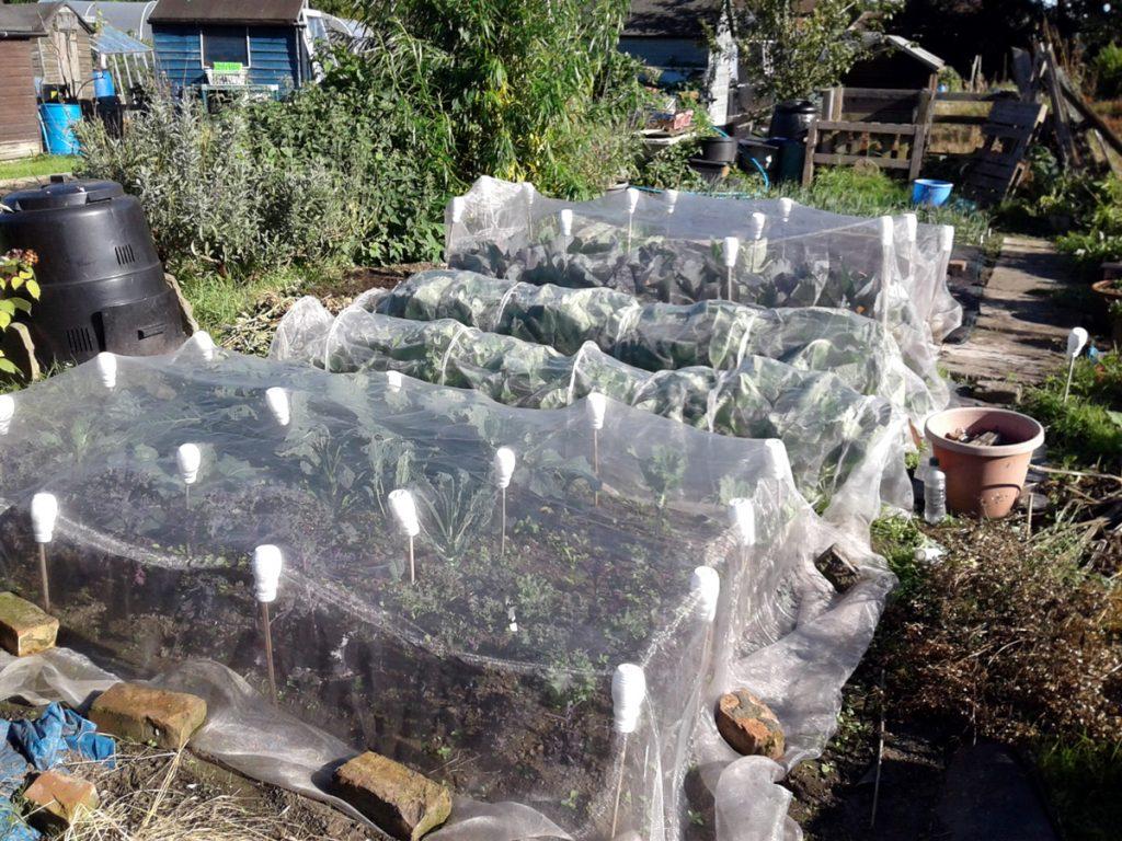 August 2016 brassica nets