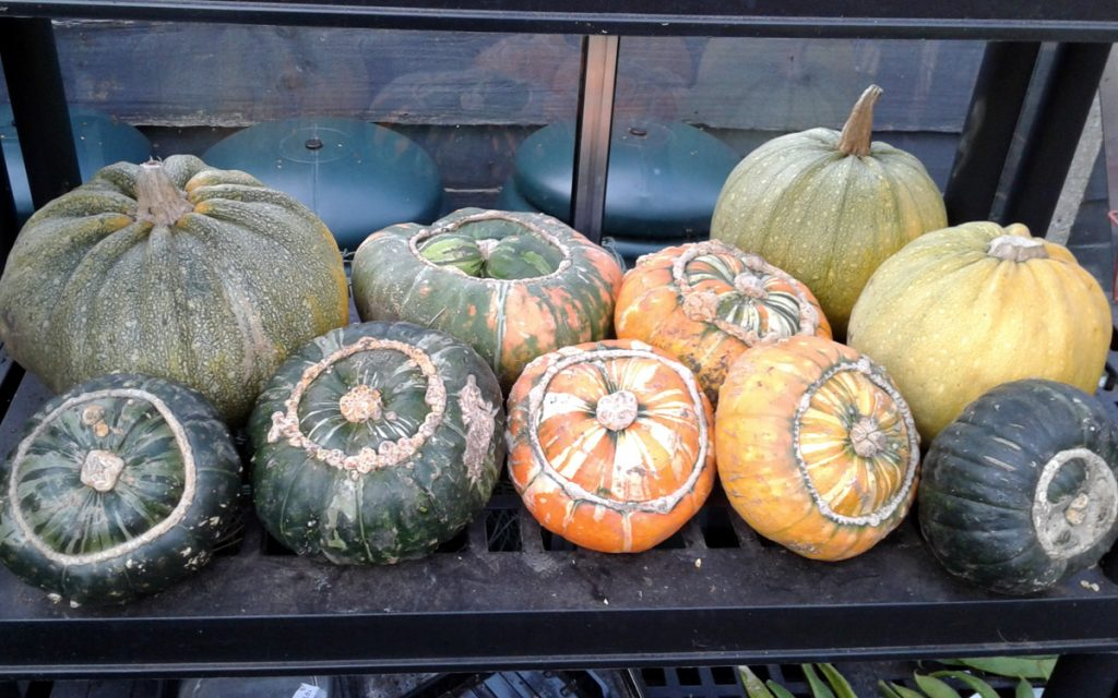 September 2016 squashes