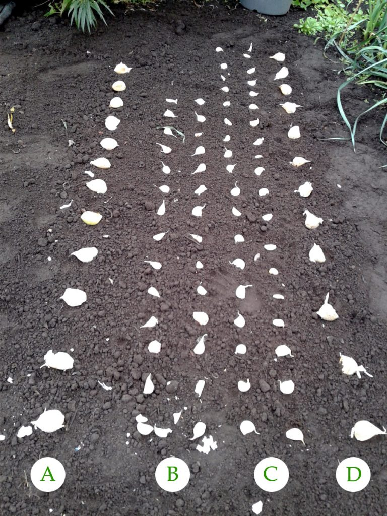 October 2016 garlic planting scheme