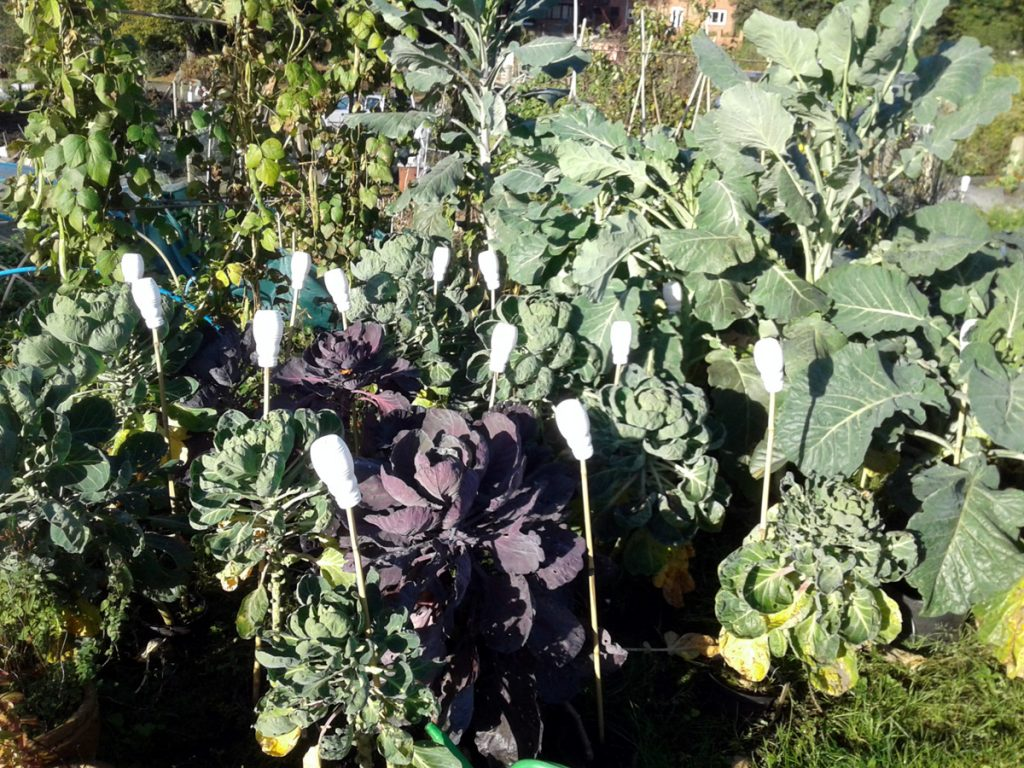 October 2016 sprouts / walking stick kale