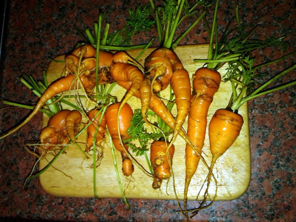 November 2016 - Manky Carrots