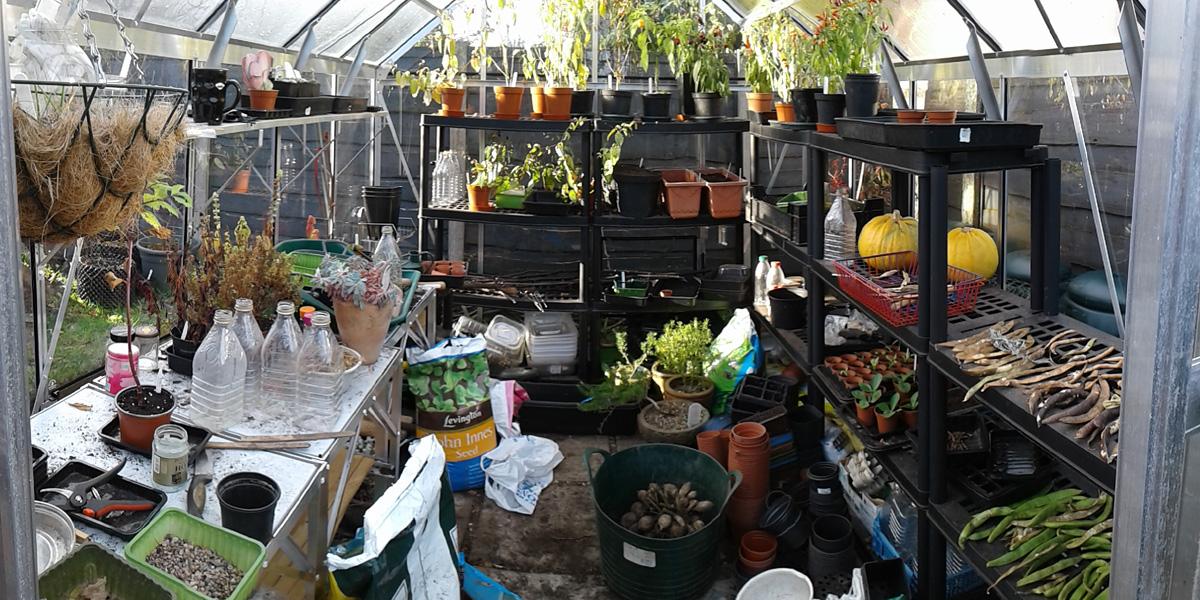 November 2016 greenhouse interior