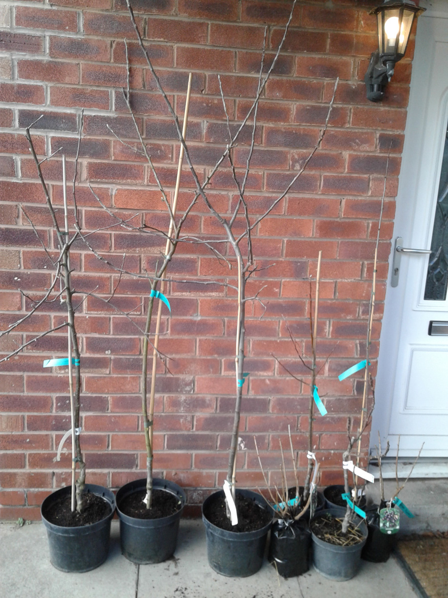 January 2017 Trees from Brogdale