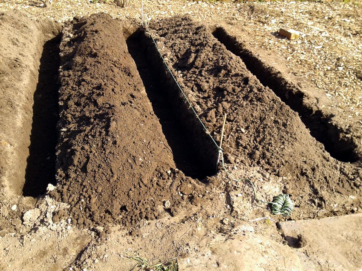 April 2017 potato trenches