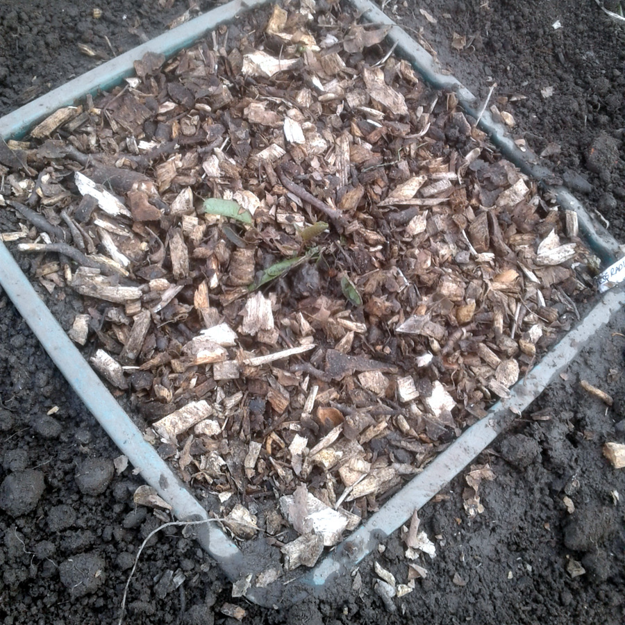 April 2017 horseradish planted our