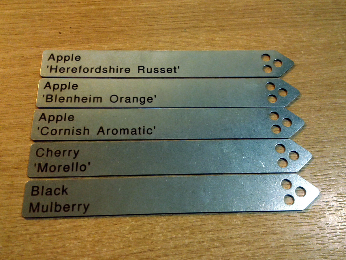 Ashley Basil stainless steel plant labels
