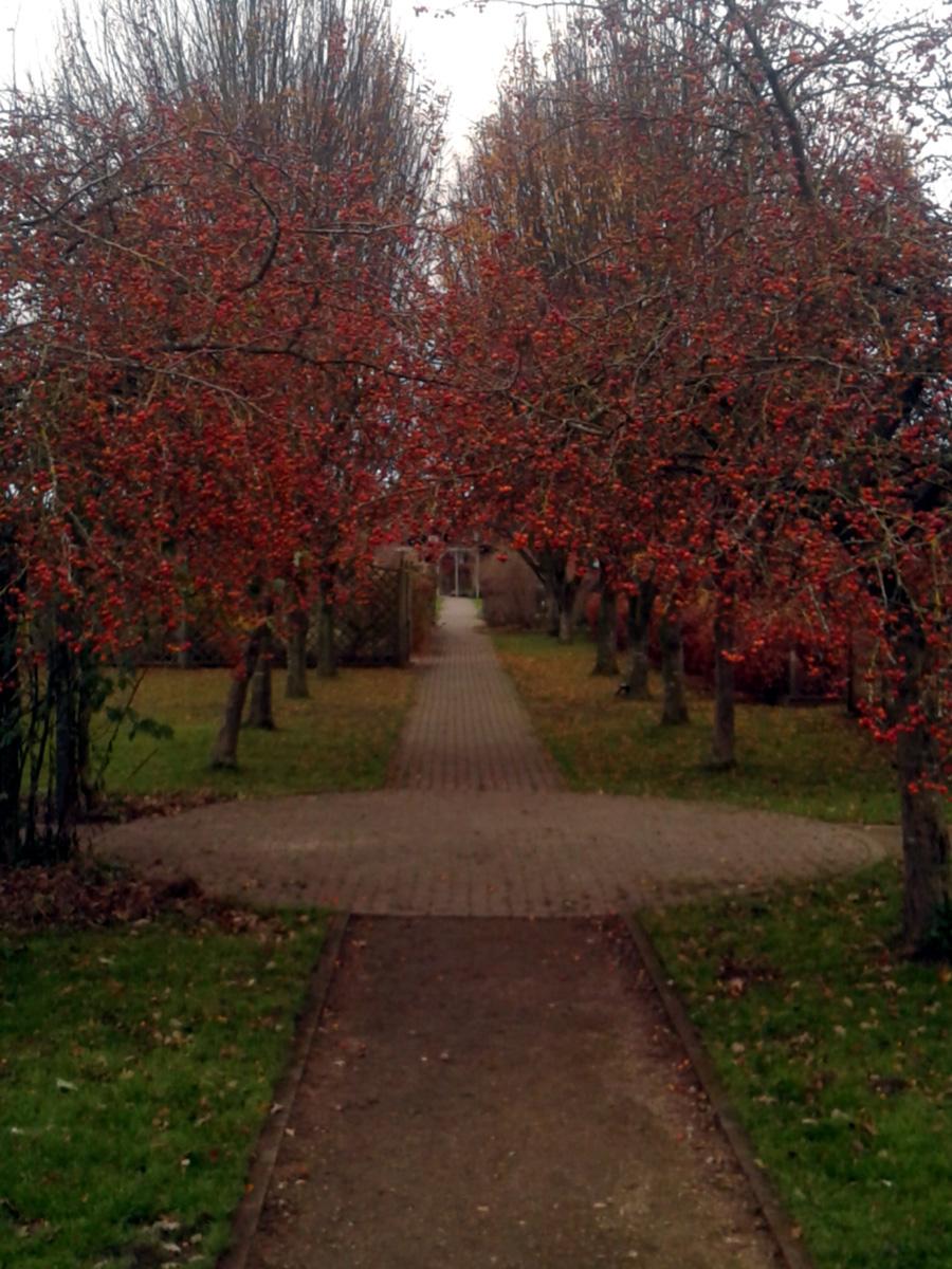 November 2017 Garden Organic fruit tree walk