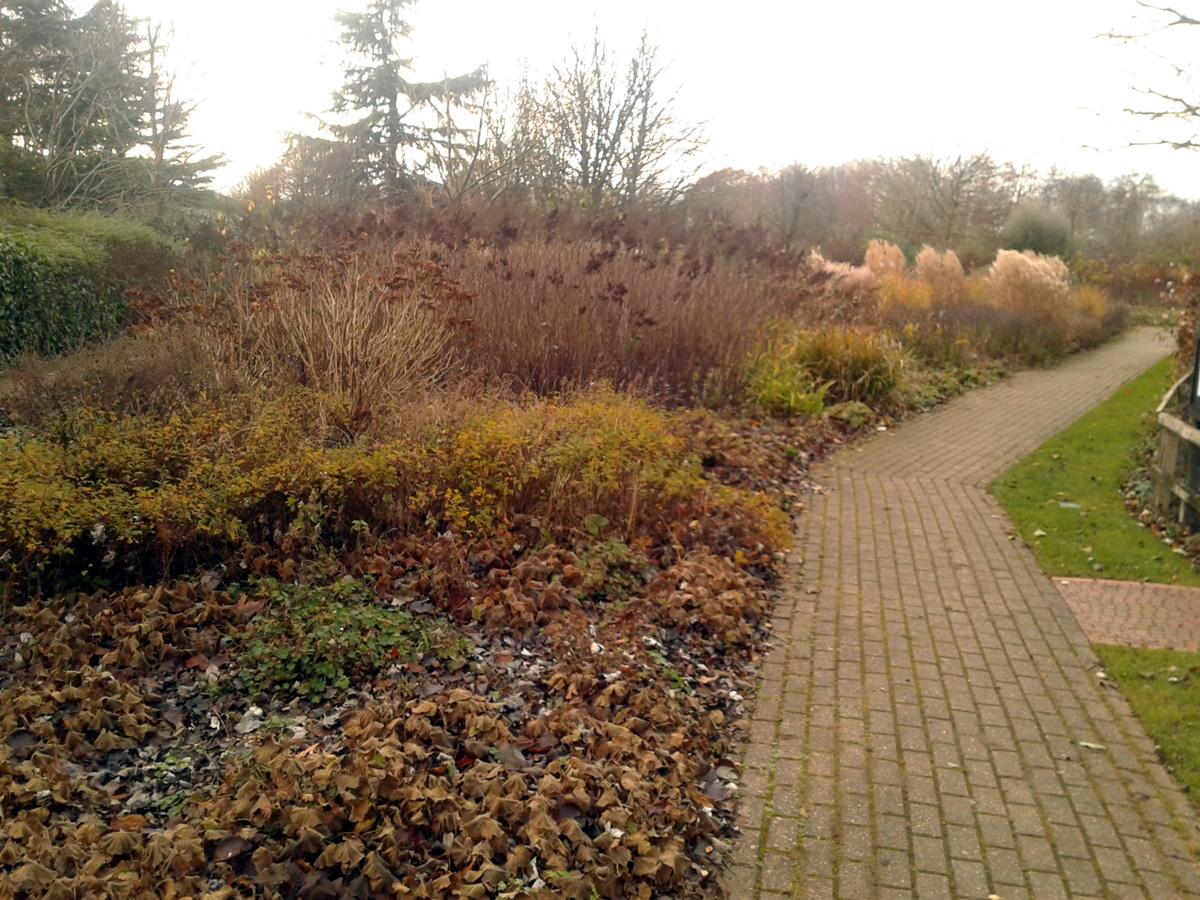 November 2017 Garden Organic low maintenance border