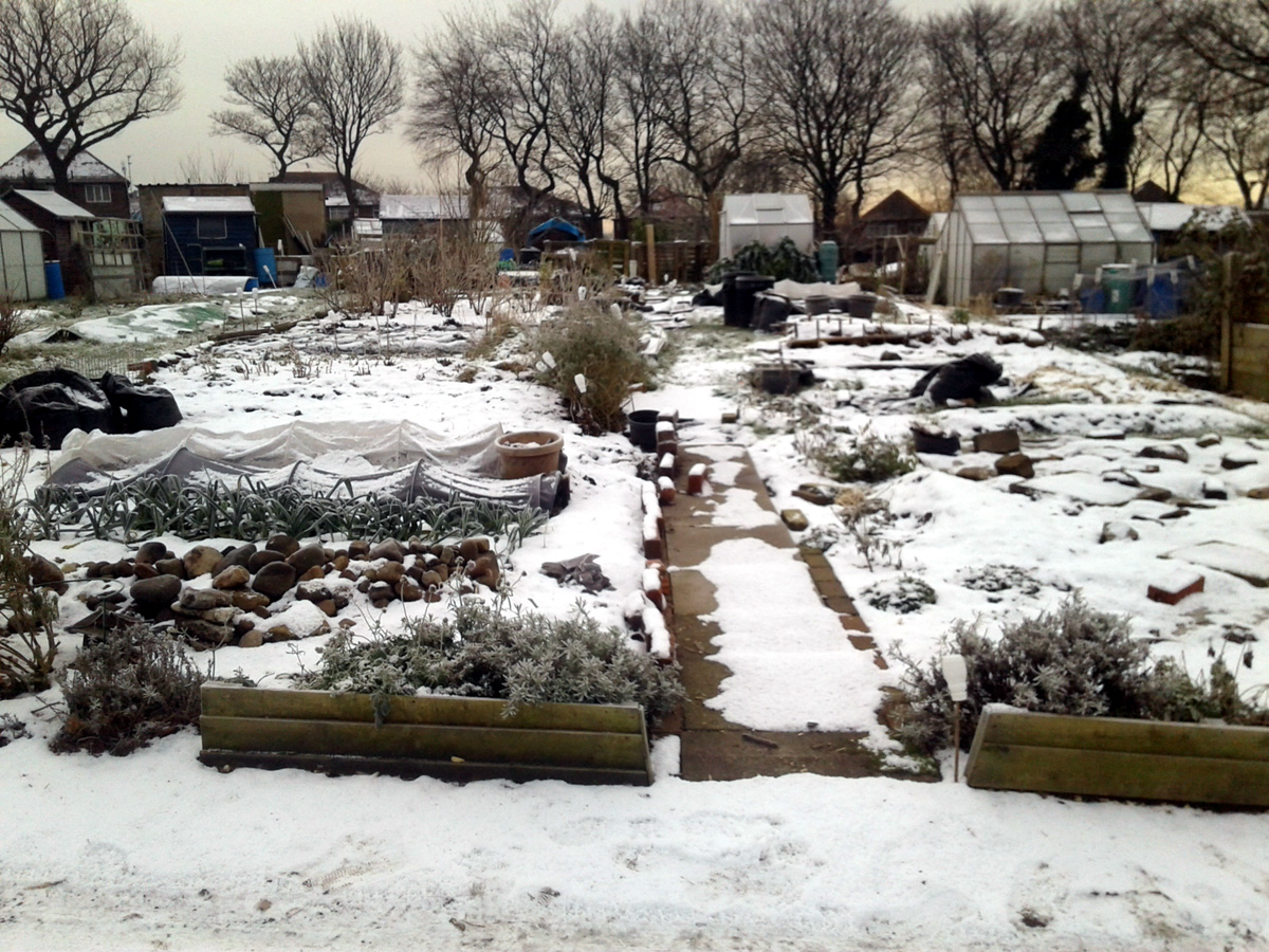 December 2017 Plot 59 in the snow
