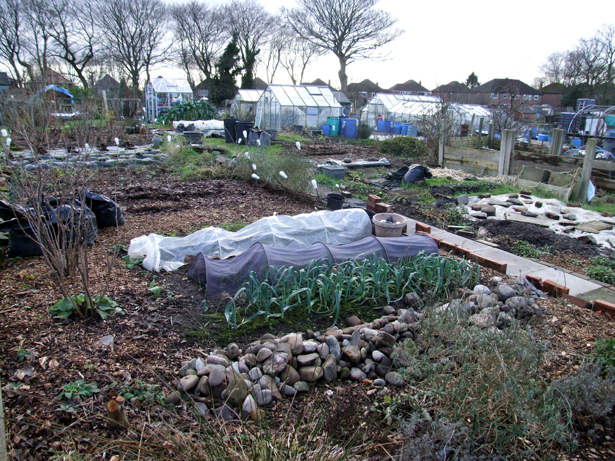 December 2017 Plot 59, from front-left corner