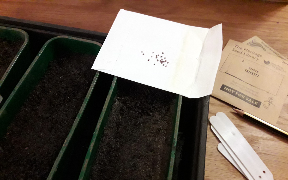 January 2019 - seed sowing underway