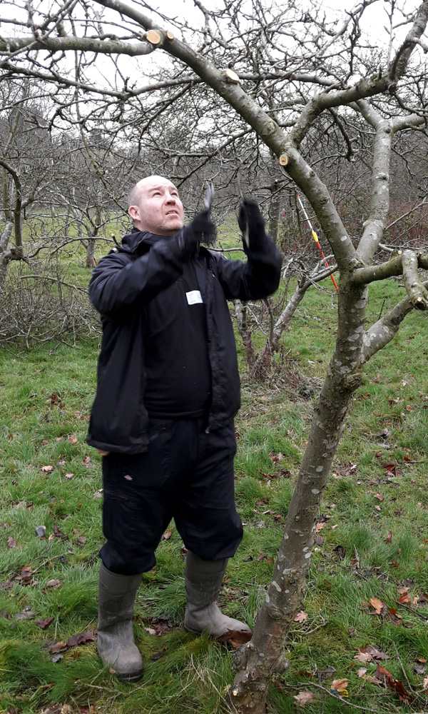 January 2019 Ian P pruning