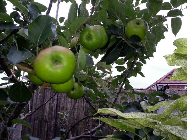 January 2019 Bramley's Seedling pic from Louise