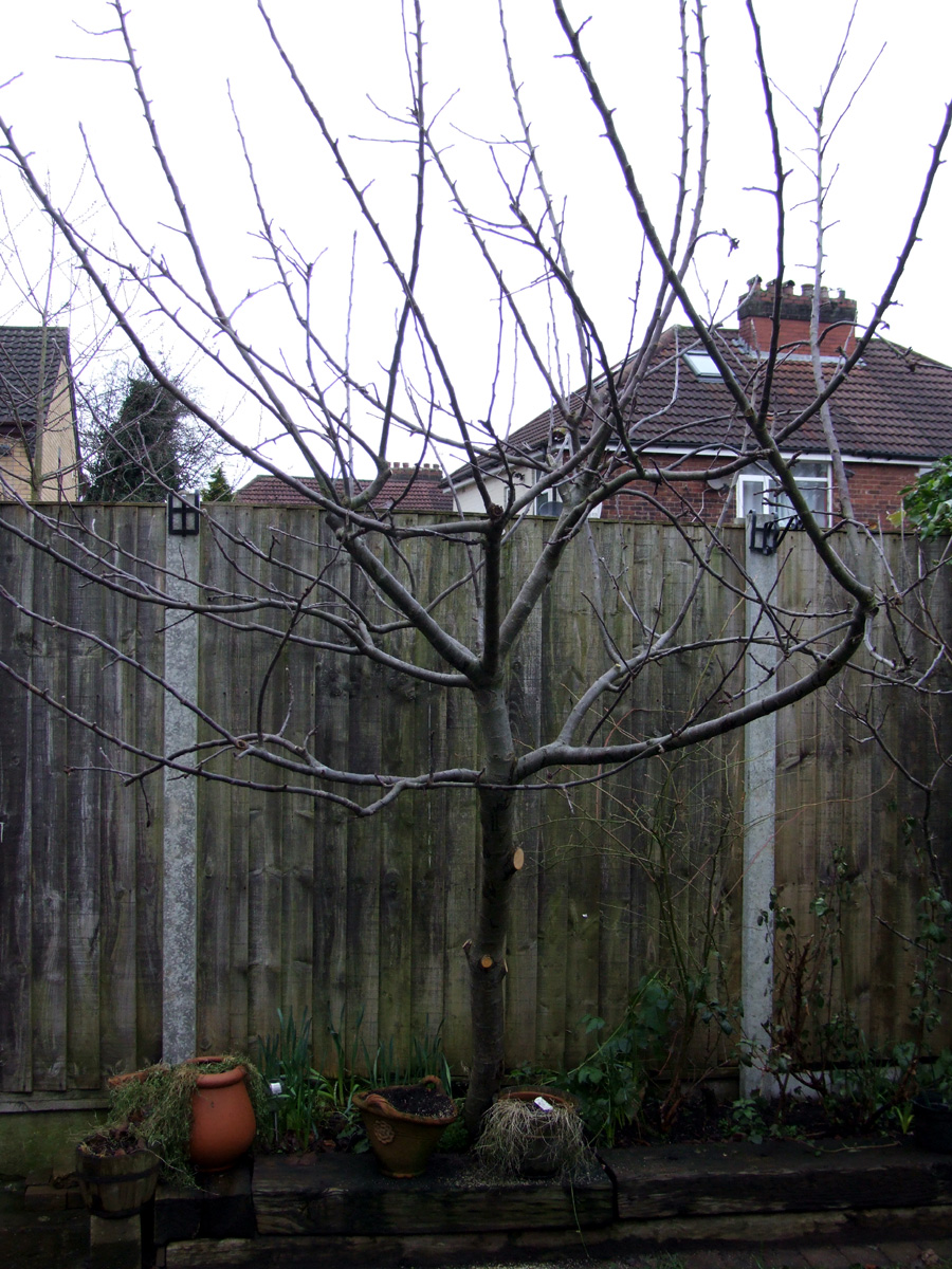 Jan 2019 tree after pruning