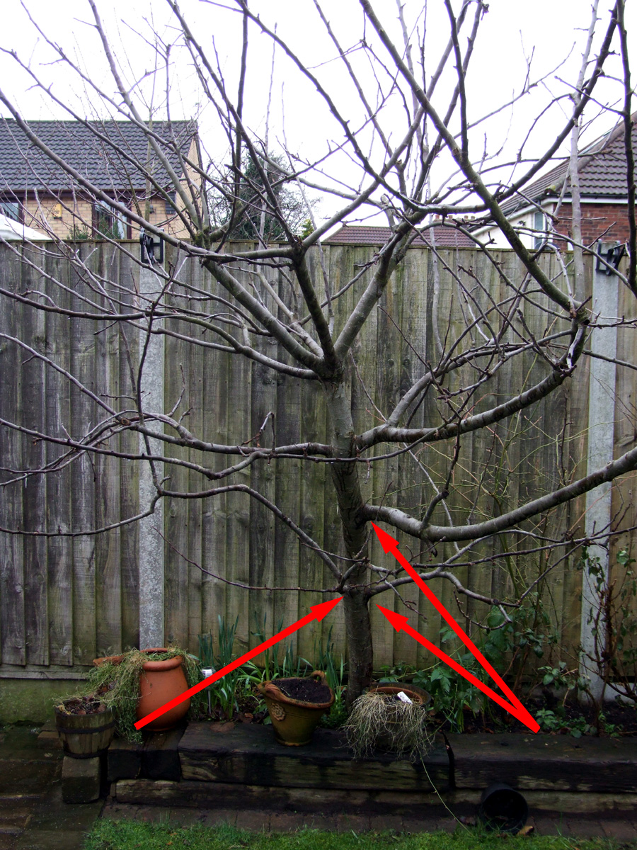 Jan 2019 tree before pruning