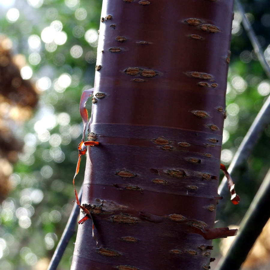 20190215 Dunham Massey bark light and shade